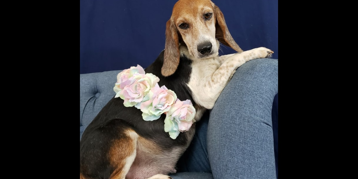 Local rescue dog has maternity shoot after saved from life in small cage