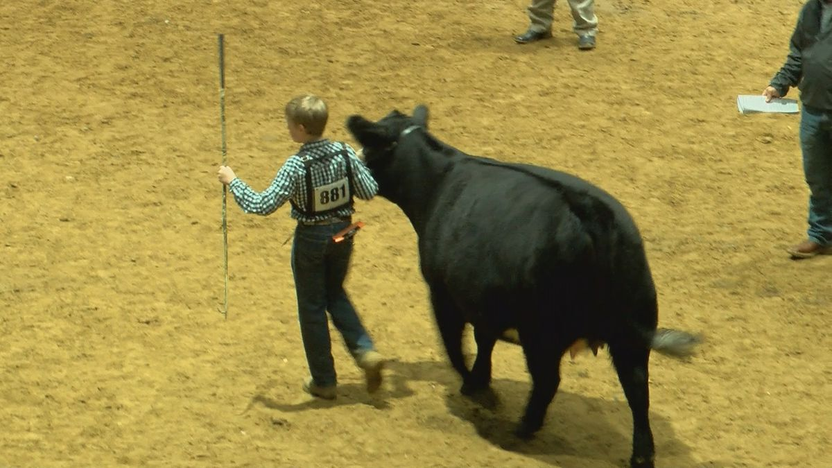 Dixie Nation Livestock Show And Rodeo Brings In Crowds And