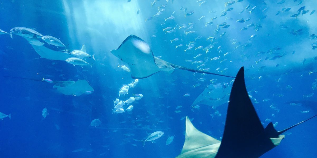 Naked man jumps into Ripley's Aquarium of Canada, swims with sharks
