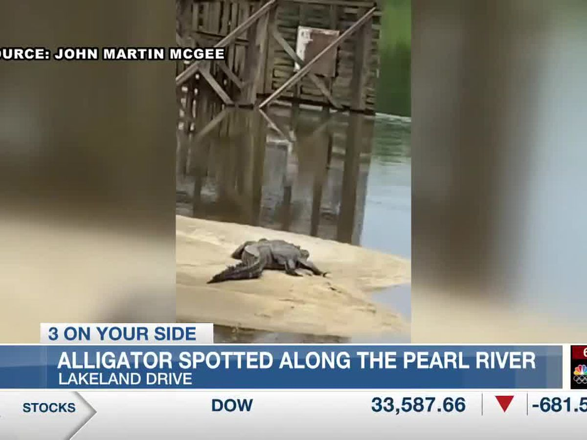 Alligator spotted near Pearl River between Jackson and Flowood