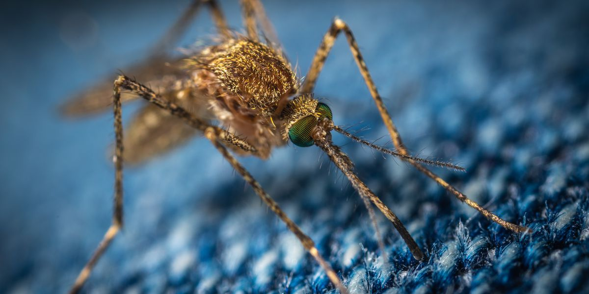 Mosquito in Wilmington tests positive for West Nile virus