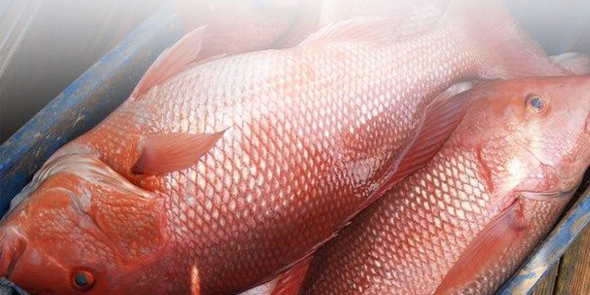 Mississippi Red Snapper season to open Friday