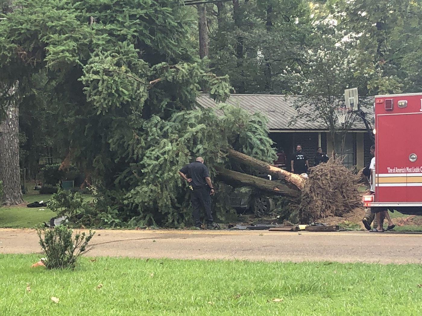 Man killed after car hits tree.