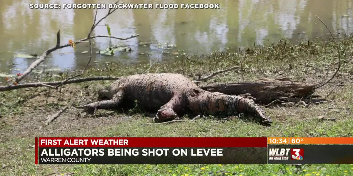 Shooting gators