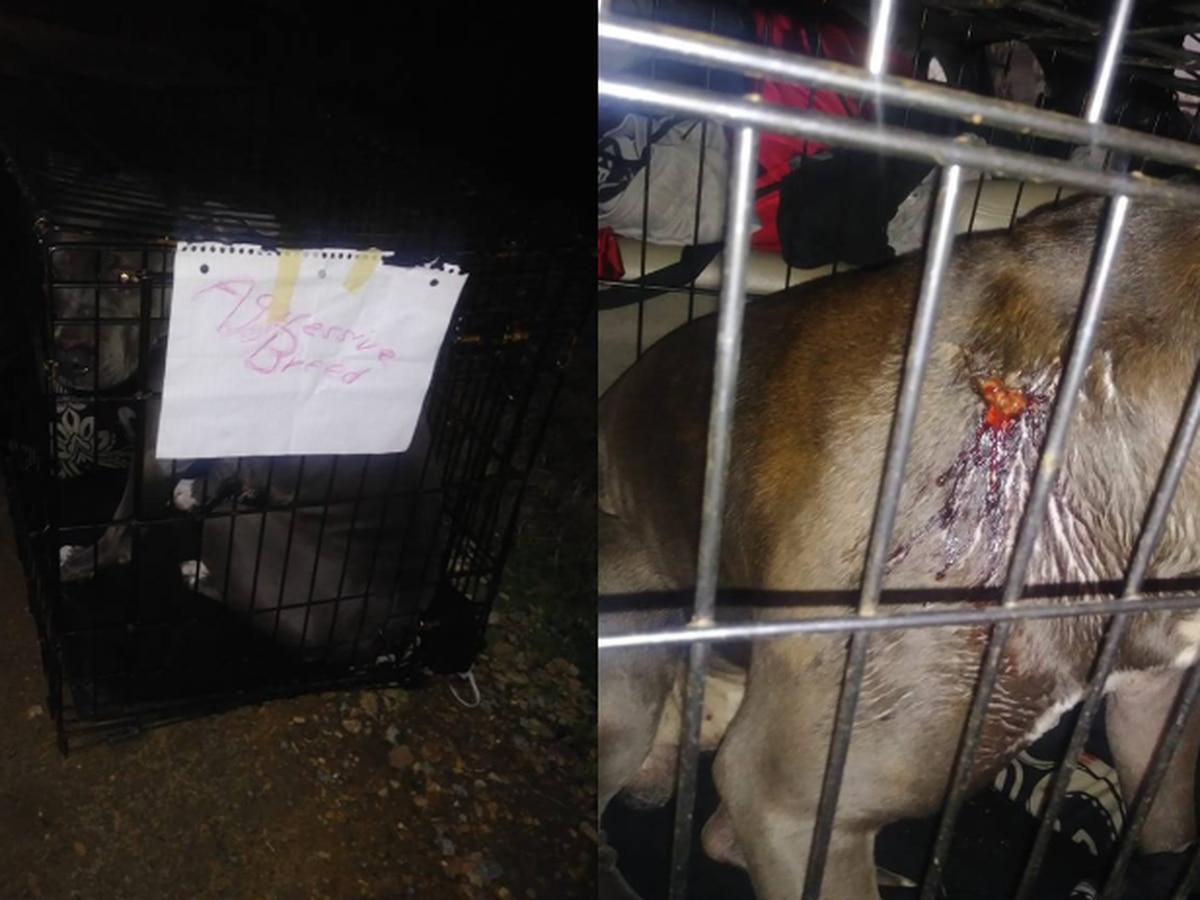 Good Samaritan finds dog shot, left in cage on side of road