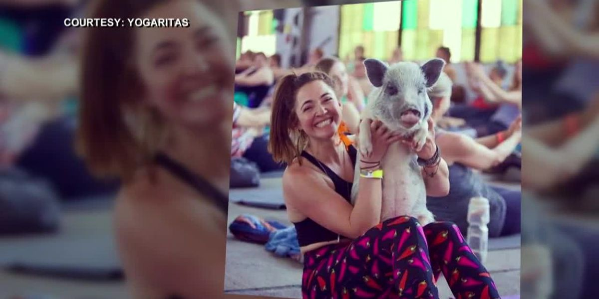 Woman pleads for return of her therapy pig