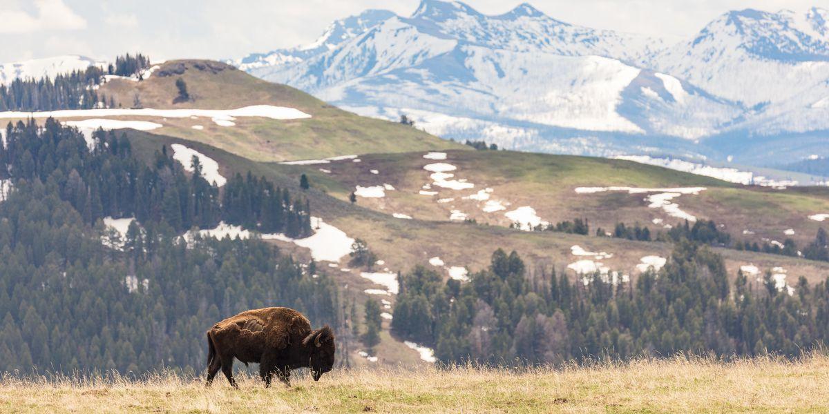 National Park Service waives entrance fees